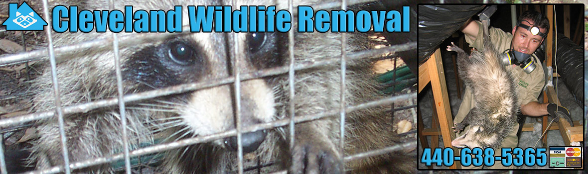 Cleveland Wildlife and Animal Removal